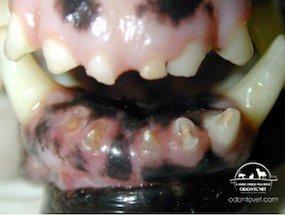 Dentes incisivos gastos devido a mordedura