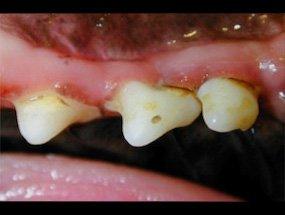 Área selhecionada da imagem ao lado dos dentes