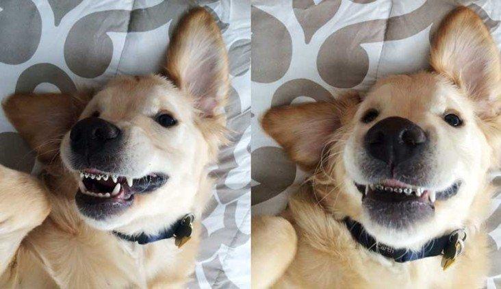 Cachorro de aparelho