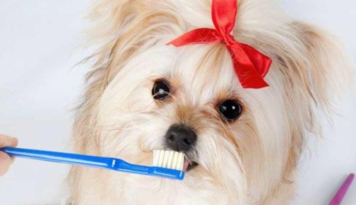 escovação em pets