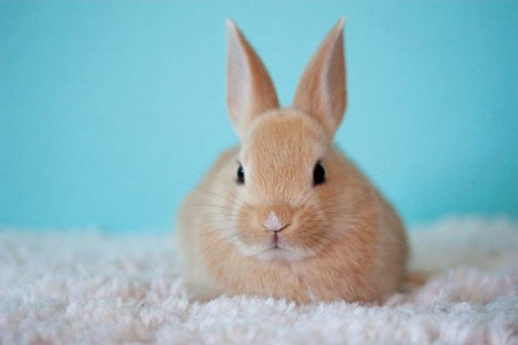 saúde bucal dos coelhos
