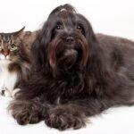 serviços odontológicos para pets